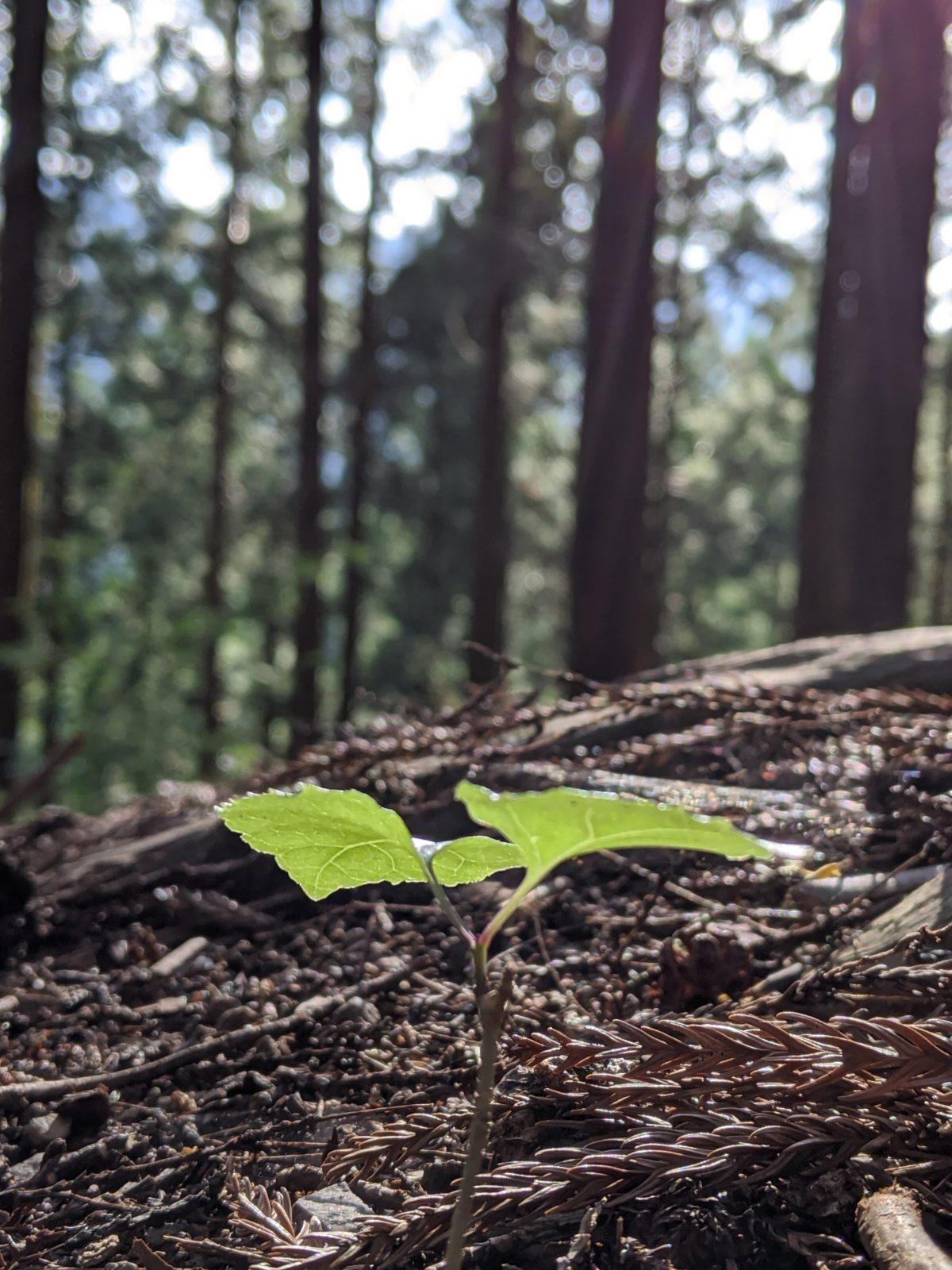 ベランダヨガからの森林浴でフルチャージ