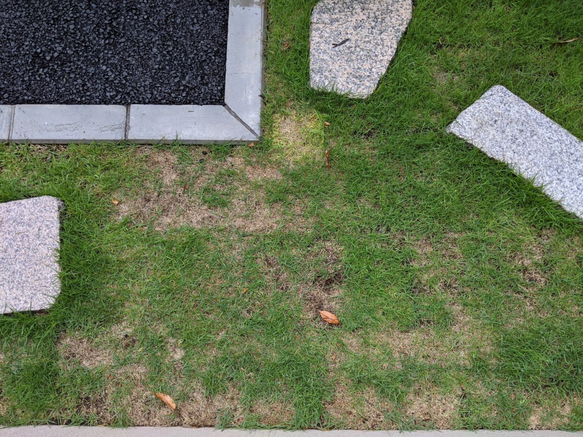 シバキーププラスαで雑草を駆逐できるのか?散布後の変化まとめ