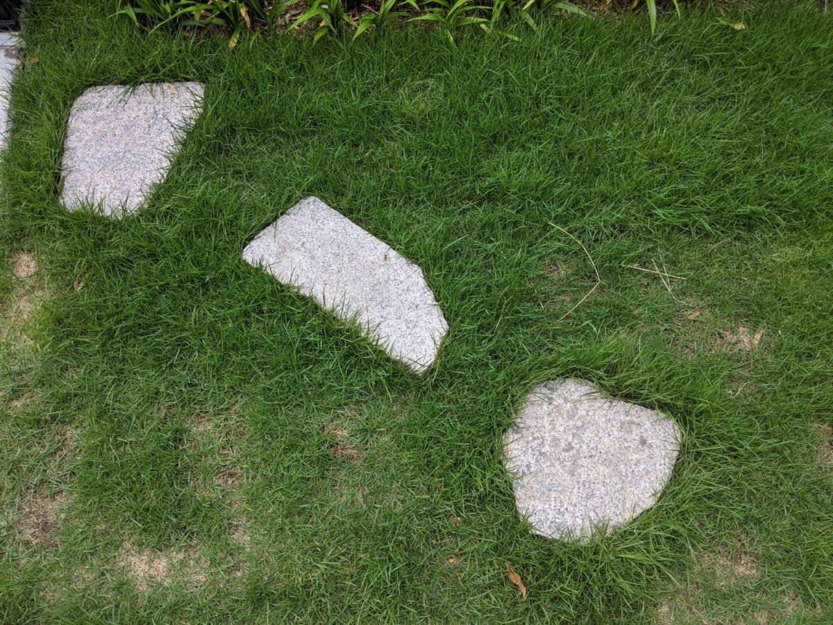 シバキーププラスα散布後16日目の芝の様子。茂っています